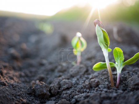 Photo for Green plants growth - Royalty Free Image