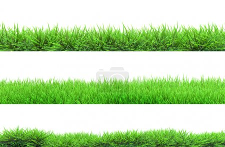 Photo for Grass isolated - Royalty Free Image