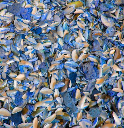 Background made up of a large sea shells