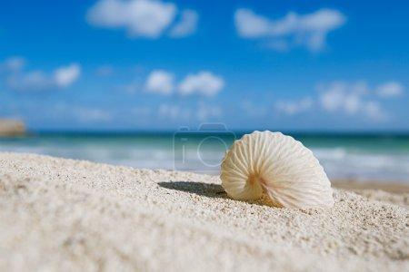 Photo pour Papier nautilus coquille avec océan, plage et paysage marin, dof peu profond - image libre de droit