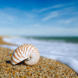 Nautilus shell on peblle  beach and sea waves near...