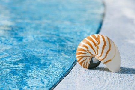 nautilus shell at resort swimming pool edge