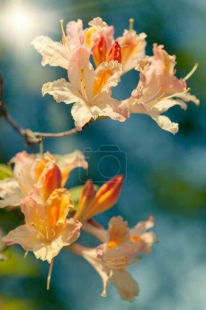 Photo pour Fleurs exotiques sur fond de ciel bleu, gros plan, dof peu profond - image libre de droit