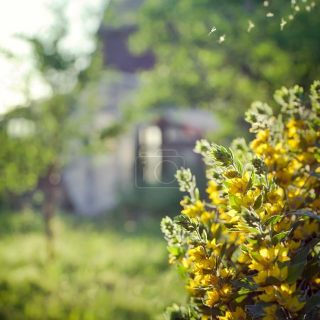 Countryside scene: old house in a garden, with flowers on the fo