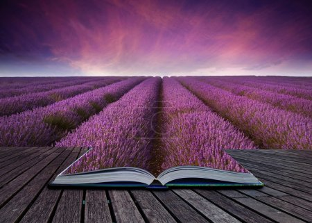 Creative concept image of lavender landscape coming out of page