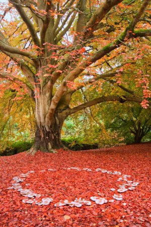 Photo pour Belle image de couleurs d'automne chute dans la nature de la flore et le feuillage fairy ring de champignons - image libre de droit