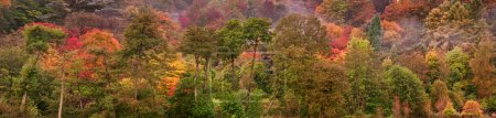 Photo pour Belle image de l'automne Couleurs d'automne dans la nature large panorama de la forêt - image libre de droit