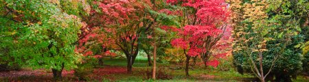 Foto de Bella imagen de otoño otoño colores en panorama amplio bosque natural - Imagen libre de derechos