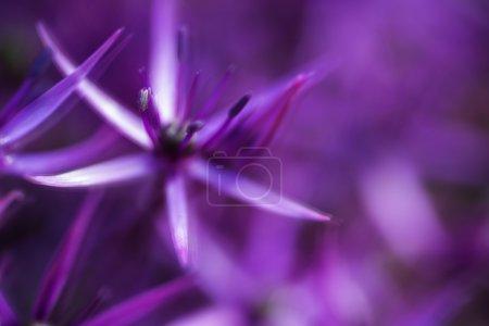 Photo pour Effet artistique belle Résumé floral violet - image libre de droit