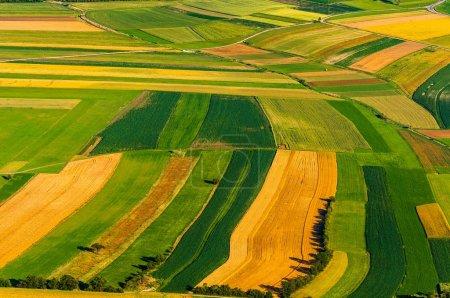 Foto de Gran campo listo para cosechar vista aérea - Imagen libre de derechos