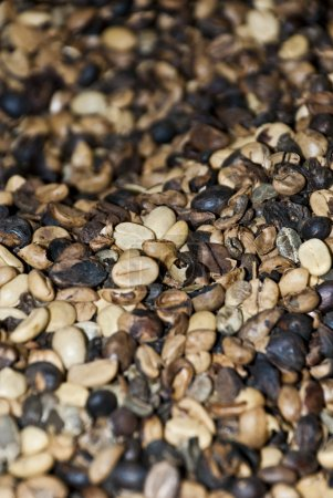 Coffee - Mixed Coffee Beans - Backgrounds And Textures