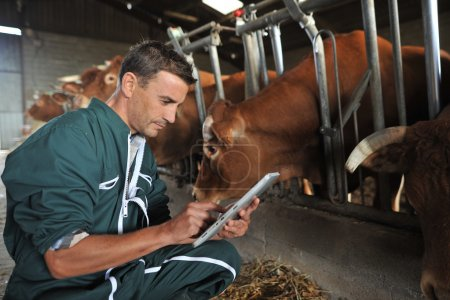 Farmer in barn using digital tablet