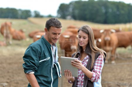 Farmer and woman in cow field using tablet