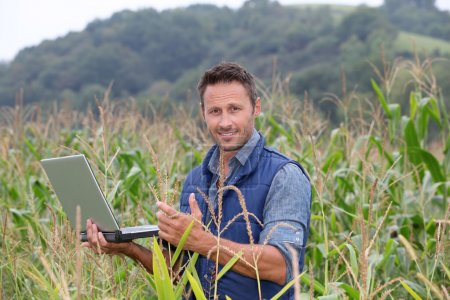 Agronomist analysing cereals with laptop computer...