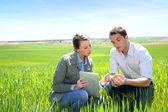 Agronom betrachten Weizen Qualität mit Bauer