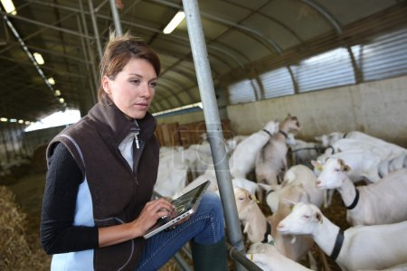 Woman using tablet in barn