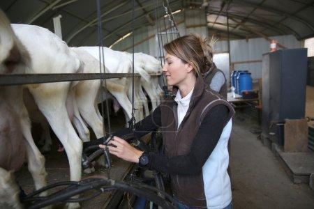 Breeder ready for goat milking