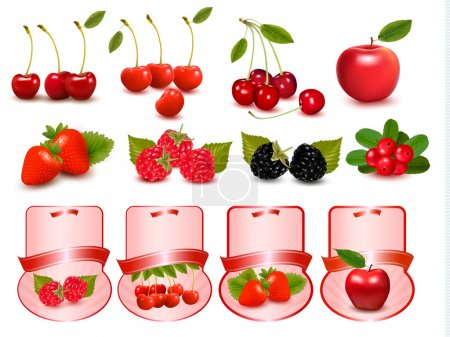 Illustration for Big set of fresh cherries and fruit and labels Vector - Royalty Free Image
