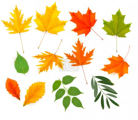 Illustration for Set of colorful autumn leaves. Vector. - Royalty Free Image
