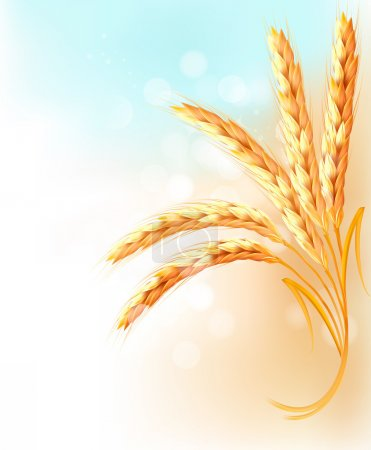 Illustration for Ears of wheat in front of blue sky. Vector illustration. - Royalty Free Image