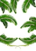 Set of backgrounds with palm leaves Vector illustration