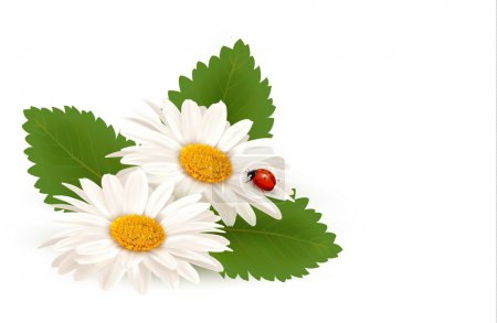 Nature summer daisy flower with ladybug. Vector illustration.