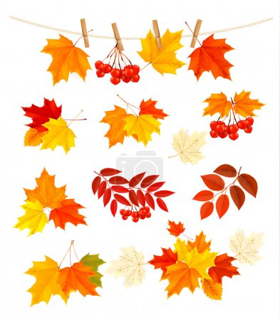 Illustration pour Fond d'automne avec des feuilles colorées. Eléments de design. Illustration vectorielle . - image libre de droit