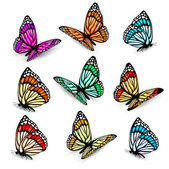Set of realistic colorful vector butterflies