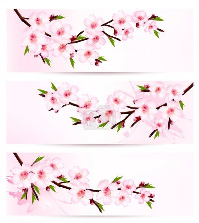 Illustration for Three sakura branch banners. Vector. - Royalty Free Image