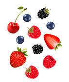 Set of juicy berries Vector