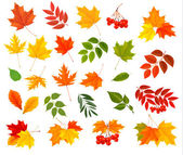 Set of colorful autumn leaves Vector illustration