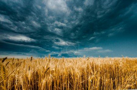 Photo pour Tempête nuages sombres sur le champ - image libre de droit