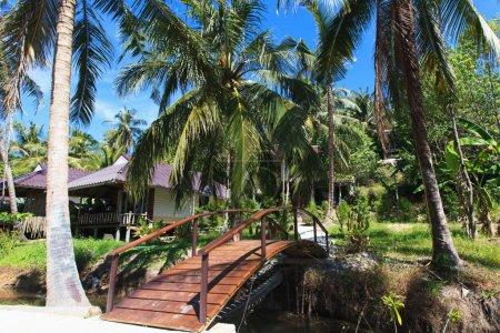 The wooden bridge of the jungle