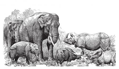 Illustration for Ancient engraving of various wild animals elephant, rhino, bison etc. - Royalty Free Image