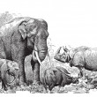 Ancient engraving of various wild animals elephant...