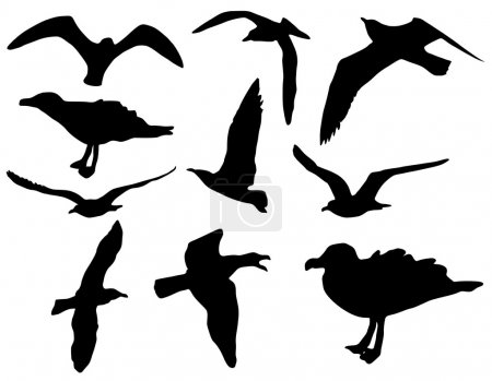 Seagull vector silhouettes, set of nine