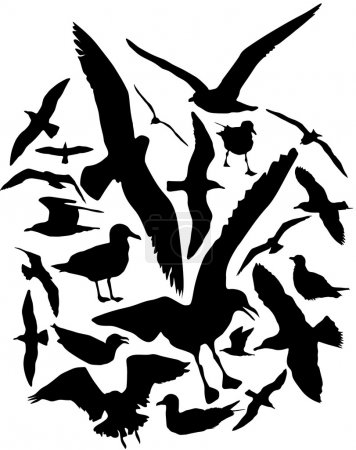 Seagulls vector silhouettes, set of 25