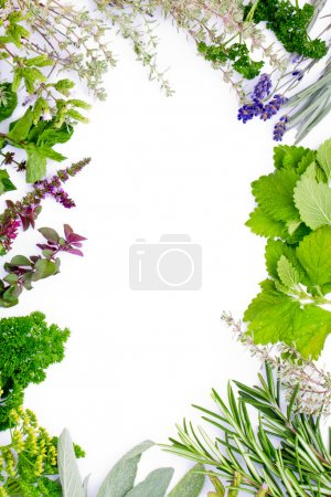 Photo for Herbs frame over white background - Royalty Free Image