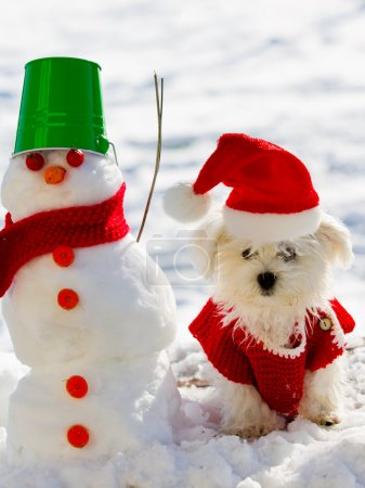 Winter fun, Christmas - cute puppy playing with snowman