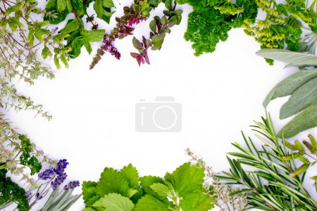 Photo for Freshly harvested herbs, herbs frame over white background - Royalty Free Image