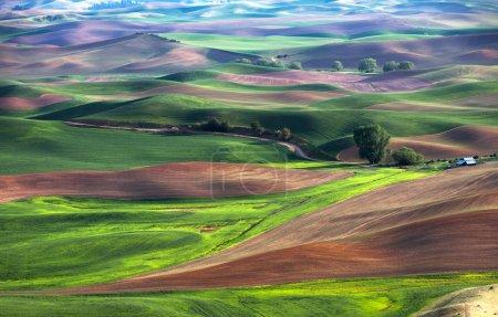 Foto de Rolling hill y granja de campos de trigo de tierra, verde - Imagen libre de derechos