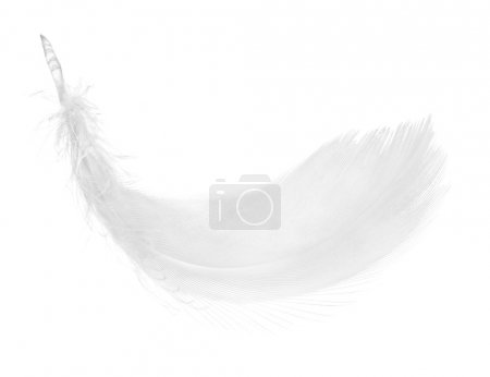 Photo for Closeup of birds feather. - Royalty Free Image