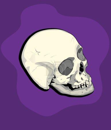 Male skull