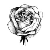 Engraved hand drawn illustrations of rose flower isolated on white