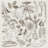 Seamless vector pattern with hand drawn spices and herbs