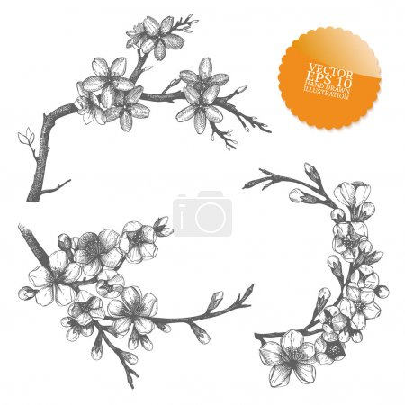 Illustration for Vintage collection of vector hand drawn blooming fruit tree twig isolated on white - Royalty Free Image