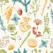 Lékařské byliny a koření