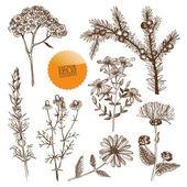 Ručně tažené byliny a rostliny