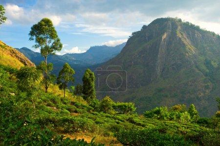 Photo for Ella Rock in Sri Lanka - Royalty Free Image