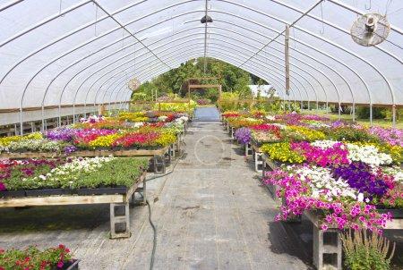 Outdoor nursery Willamette valley Oregon.